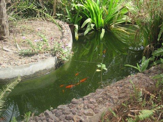 Bakotu Hotel: Goldfish at the hotel grounds