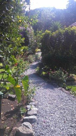 Boquete Garden Inn : main walking path to hotel rooms