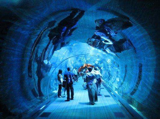 Dubai Aquarium & Underwater Zoo: tunnel...
