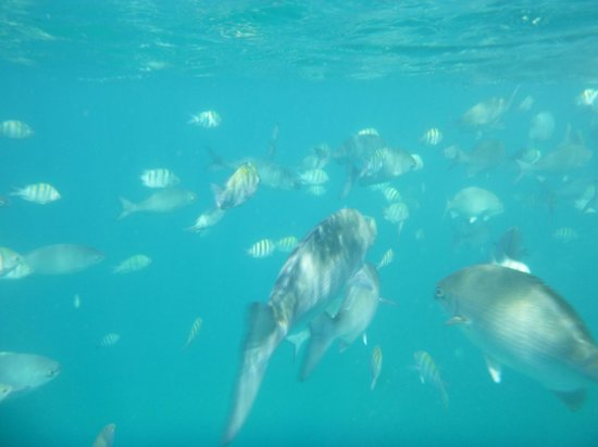 Mango Bay All Inclusive: Snorkeling off the glass bottom boat