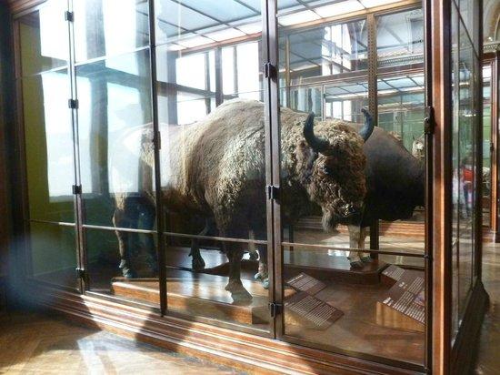 Muséum d'histoire naturelle de Vienne : Informationsraum im Naturhistorisches Museum