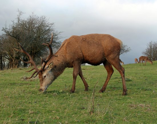 The Garden Room at Strathspey: Stag seen at Broadway Tower during our stay.