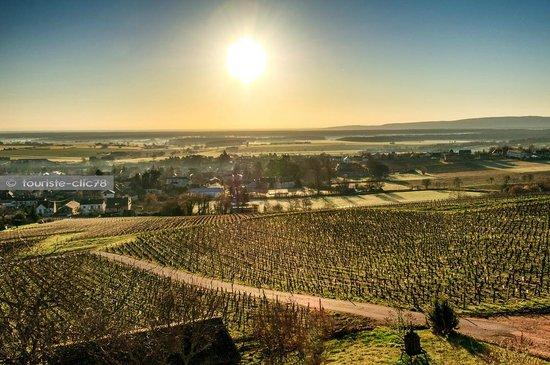 Chambres d'Hôtes Davenay : Vue sur les vignobles au petit matin