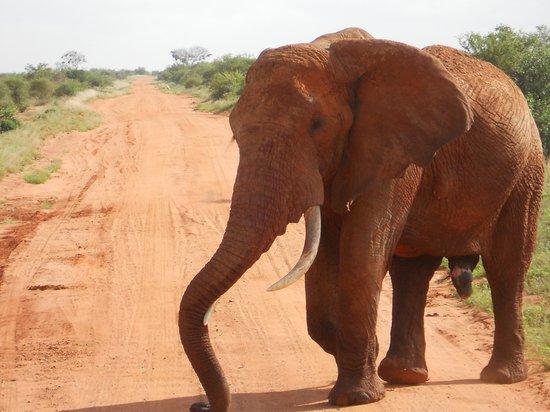 Aquarius Club : elefante