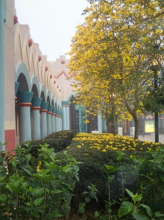 Disney's Coronado Springs Resort: Acacia Trees in bloom