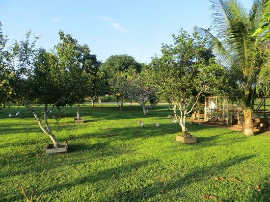 River Park Inn : views of variety of fruit trees and chicken, ducks, a turkey,etc..