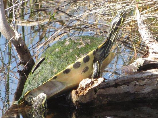 Lake Woodruff National Wildlife Refuge: One of 20 !