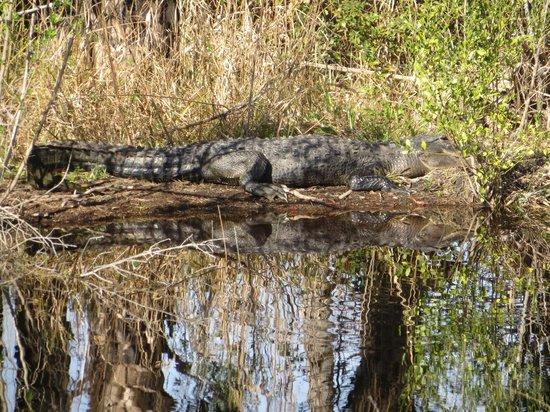 Lake Woodruff National Wildlife Refuge: Watch your step!