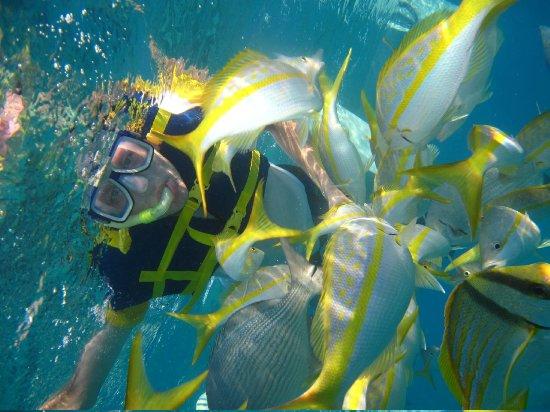 Royalton Hicacos Varadero Resort & Spa: Snorkeling offshore was a delight!