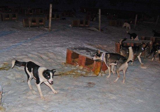 Tromsø Wilderness Centre: dogs