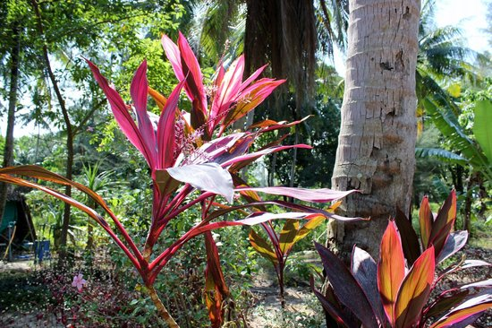 Papillon Bungalows: Flowers on the path to the beach