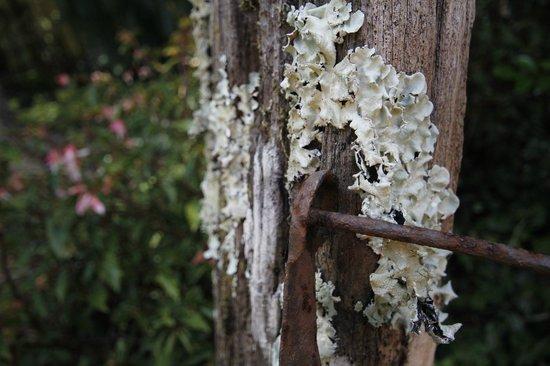 Bendles Cottages & Villas : Rustic Gardens