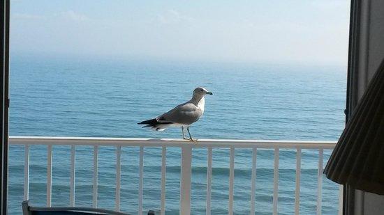 Radisson Suite Hotel Oceanfront: Diariamente você será acordado por ela...