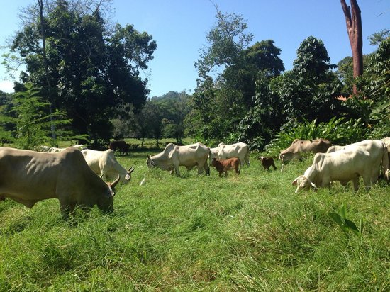 Be My Guest Cabinas : The cows that live next door