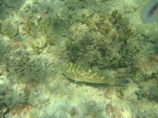 Occidental Papagayo - Adults only: Puffer