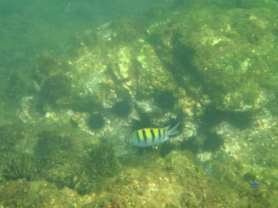 Occidental Papagayo - Adults only: Plenty of fishies...
