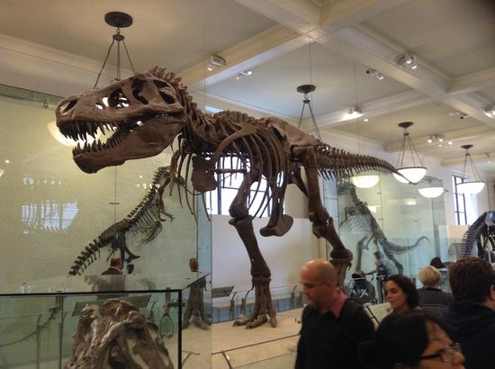 American Museum of Natural History : The Dinosaurs