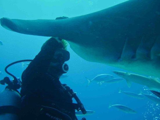 Bimini Sands Resort and Marina: Neale Watson and a Hammerhead