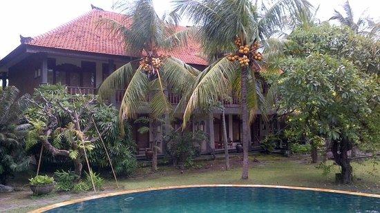 Nirwana Seaside Cottages: Coconuts anyone?