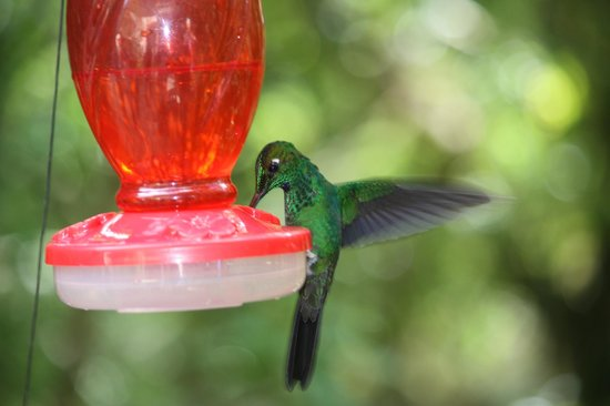 Hummingbird Gallery: Hummingbird
