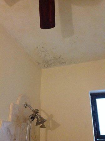 Casa Tía Micha: Moldy ceiling in room.