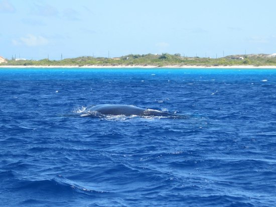 Blue Water Divers: Whale we saw while on break