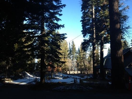 Tahoma Meadows B&B Cottages: surrounded by pines