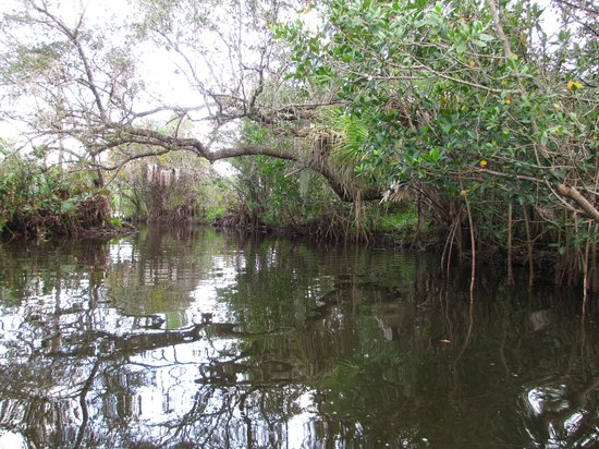 Manatee Park: Canal to the boat rental