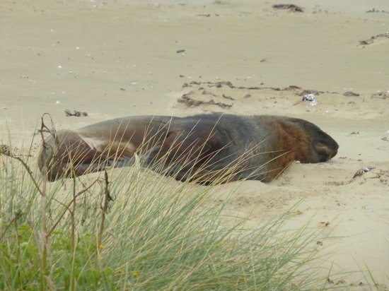 Nugget Lodge: One of the locals (sealion having a snooze)