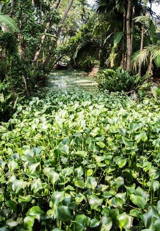 The Pamba Heritage Villa : Lush greenery