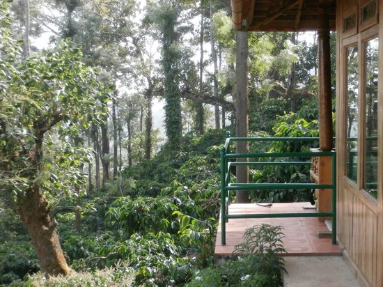 Ayurveda Yoga Villa : view to the coffee plantation