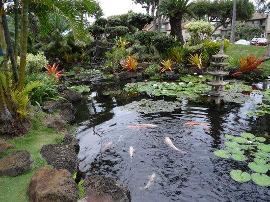 Pono Kai Resort: .