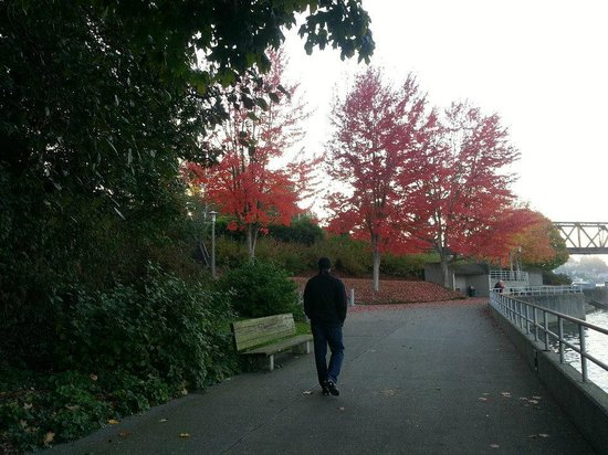 Hiram M. Chittenden Locks : The Trail