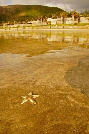 Six Senses Con Dao: Strand bei Ebbe mit unzähligen Krabben