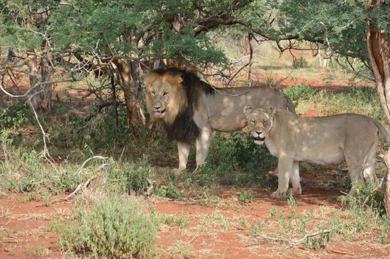 Etali Safari Lodge: amazing views