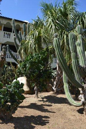 Bucuti & Tara Beach Resort Aruba: Grounds