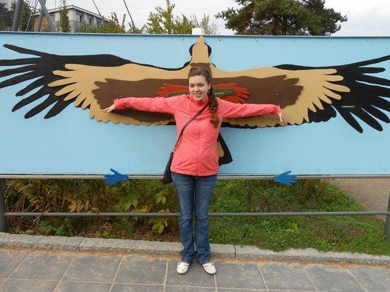 Helsinki Zoo (Korkeasaari Elaintarha): длина крыльев птиц