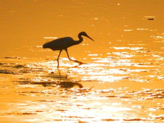 Langkawi Lagoon Resort : единственные кто рад обмелению моря