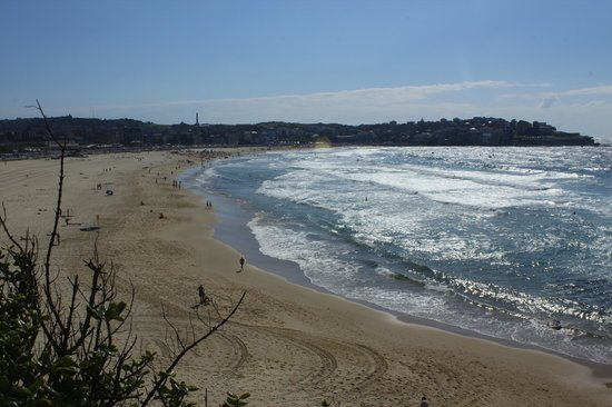 Bondi to Coogee Beach Coastal Walk: coastal walk