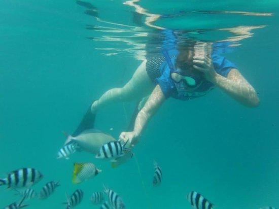 Island Time Kayaking Tours - Day Tours: Feeding the fish