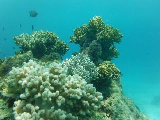 Island Time Kayaking Tours - Day Tours: Coral reef