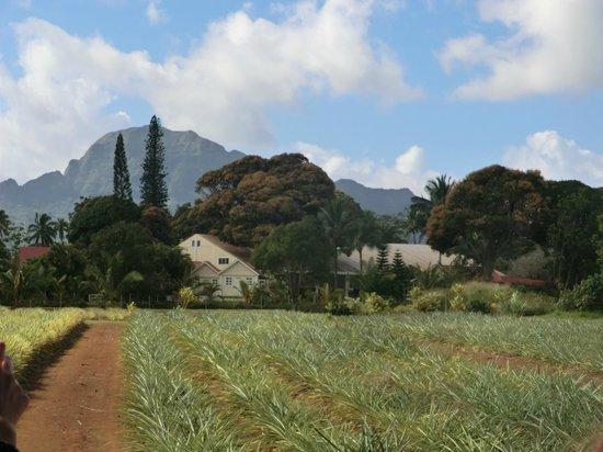 Kilohana Plantation Estate: scenery