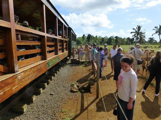 Kilohana Plantation Estate: train stopping at animals