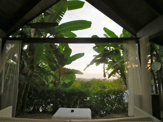 Oxygen Jungle Villas: View from our room (hard to see here but the ocean is beyond the trees…easier to see in person)