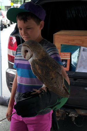The Caloundra Street Fair: Owl