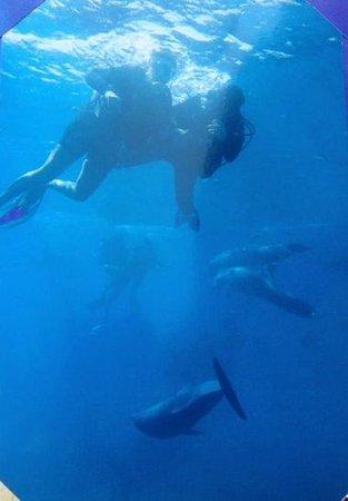 U Coral Beach Club Eilat: Le rêve…nager avec les dauphins en pleine mer