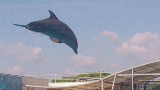 Four Elements Suites: Dolphin park on sea front