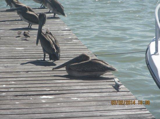 Villas HM Paraiso del Mar: dom är överallt