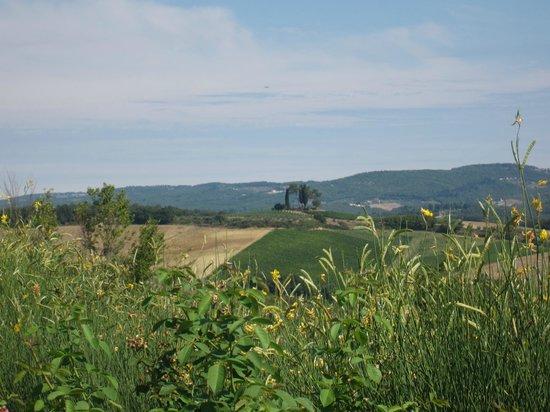 Agriturismo Il Castagno: vue sur les collines depuis la piscine
