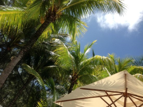 Tropical Attitude : View from pool
